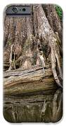 Clinging Cypress IPhone Case by Christopher Holmes