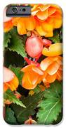 Colorful Flowers IPhone Case by Tom Gowanlock