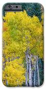 Colorful Forest IPhone Case by James BO  Insogna