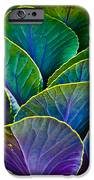 Colors Of The Cabbage Patch IPhone Case by Christi Kraft