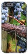 Concord Purple IPhone Case by Wendy Raatz Photography