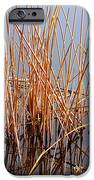 Creations Illusion IPhone 6s Case by Steven Milner
