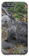 Cub Of The Year IPhone Case by Gary Hall