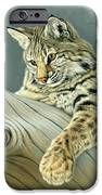Curiosity - Young Bobcat IPhone Case by Paul Krapf