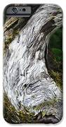 Cycle Of Life IPhone Case by Bill Caldwell -        ABeautifulSky Photography