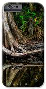 Cypress Roots IPhone Case by Christopher Holmes