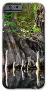 Cypress Trees - Nature's Relics IPhone Case by Christine Till