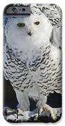 Dance Of Glory - Snowy Owl IPhone Case by Inspired Nature Photography Fine Art Photography