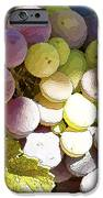 Della Vite IPhone Case by Artist and Photographer Laura Wrede