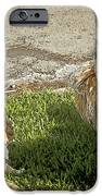 Dog And Cat Discuss IPhone Case by Artist and Photographer Laura Wrede