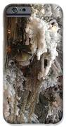 Dreamy Trees Ethereal Winter White Snow On Trees Nature Winter White IPhone Case by Kathy Fornal