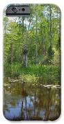 Everglades Lake IPhone Case by Rudy Umans