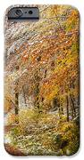 Fall Or Winter - Autumn Colors And Snow In The Forest IPhone Case by Matthias Hauser