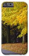 Fall Road And Trees IPhone Case by Elena Elisseeva