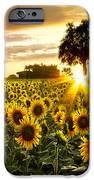 Fields Of Gold IPhone Case by Debra and Dave Vanderlaan