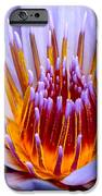 Fiery Eloquence IPhone Case by Karon Melillo DeVega