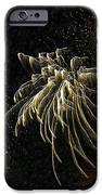 Fireworks As I See Them  IPhone Case by F Leblanc