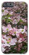 Flourishing Pink Magnolias IPhone Case by Deborah  Montana