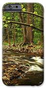 Forest River IPhone Case by Elena Elisseeva
