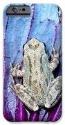 Frog On Cabbage IPhone Case by Jean Noren