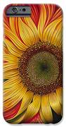 Girasol Dinamico IPhone Case by Ricardo Chavez-Mendez