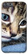 Gizmo Feeling Blue IPhone Case by Terri Waters
