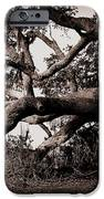 Gnarly Limbs At The Ashley River In Charleston IPhone Case by Susanne Van Hulst