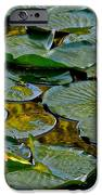 Golden Lilly Pads IPhone Case by Frozen in Time Fine Art Photography