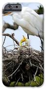 Great Egret Chicks - Sibling Rivalry IPhone Case by Carol Groenen