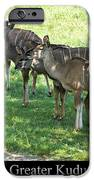 Greater Kudu IPhone Case by Chris Flees