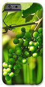Green Berries IPhone Case by Kaye Menner