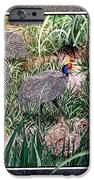 Guinea Fowl In Guinea Grass IPhone Case by Sylvie Heasman