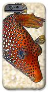 Guinea Fowl Puffer Fish IPhone Case by Bill Caldwell -        ABeautifulSky Photography