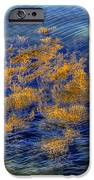 Hdr Underwater Plant Life IPhone Case by Jamie Roach