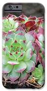 Hen And Chicks IPhone Case by Tony Murtagh