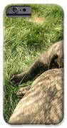 Hey You Come Back Here Buddy IPhone Case by Jeff Swan