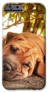 In The Shade IPhone Case by Jane Rix