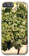 In The Vineyard IPhone Case by Artist and Photographer Laura Wrede