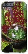 Inca Bromeliad Detail IPhone Case by Gerry Ellis