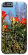 Indian Paintbrush IPhone Case by Robert Bales