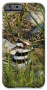 Killdeer IPhone Case by Linda Freshwaters Arndt