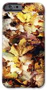 Leaves IPhone Case by John Rizzuto