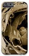 Life II IPhone Case by Yanni Theodorou
