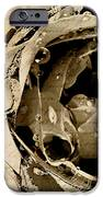 Life Vi IPhone Case by Yanni Theodorou