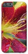 Lily In My Patio IPhone Case by Sonali Gangane