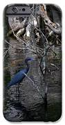 Little Blue Heron IPhone Case by Skip Willits