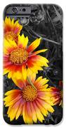 Living Color IPhone Case by Diane E Berry