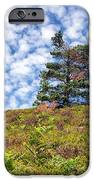 Lonely Tree IPhone Case by Adrian Evans