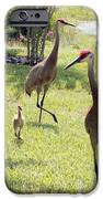 Looking For A Handout IPhone Case by Carol Groenen