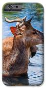 Lovely Time In Water.  Male Deer In The Pampelmousse Botanical Garden. Mauritius IPhone Case by Jenny Rainbow